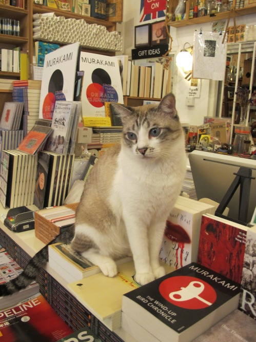 At Books Actually, a very nice shop. Cat included.