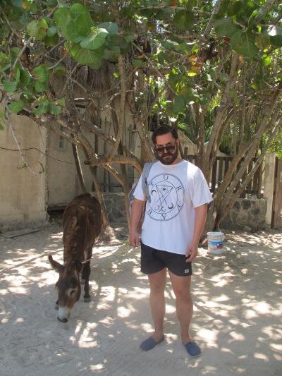 Martin got a donkey